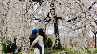 木の隣に立っている人の写真・画像素材[3064141]