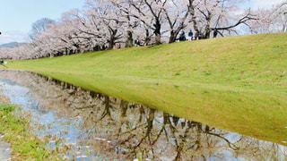 草と木のある道の写真・画像素材[3064157]