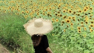 草の中を歩いている人の写真・画像素材[3496367]