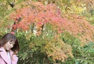 木の中の女の子の写真・画像素材[3867246]
