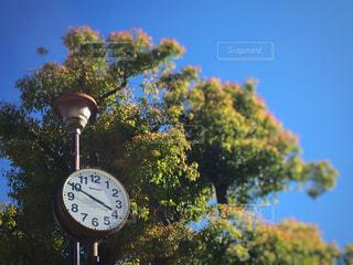 公園,青空,時計
