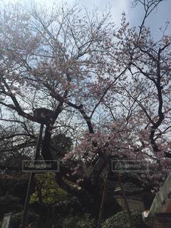 公園の写真・画像素材[402003]