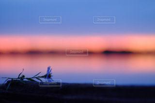 水の体に沈む夕日の写真・画像素材[957051]