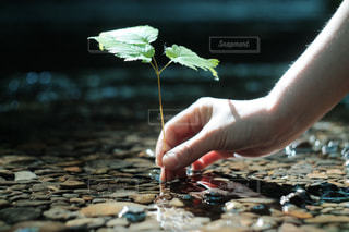 地球で生け花の写真・画像素材[965350]