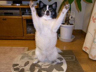 白い犬の上に座っている猫 - No.977923