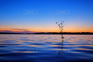 水の体に沈む夕日の写真・画像素材[1296348]