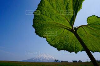 コロポックルから見た羊蹄山の写真・画像素材[1405687]