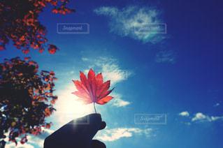 眩しいよ、秋の写真・画像素材[1618726]