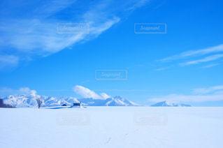 美瑛の雪原の写真・画像素材[1732180]