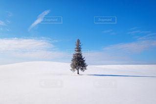 クリスマスツリーの木の写真・画像素材[1732185]