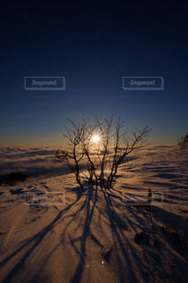 雪原の日の出の写真・画像素材[1732197]