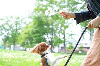 私と犬の写真・画像素材[2033165]