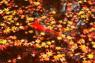 京都の写真・画像素材[777618]