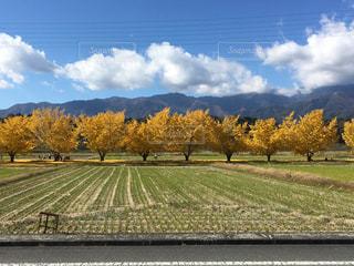 空,秋,屋外,山,イチョウ並木