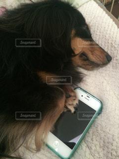 犬の写真・画像素材[472654]