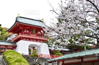 桜,観光,お花見,日本,歴史,山口県,赤間神宮,下関市,維新の町,安徳天皇
