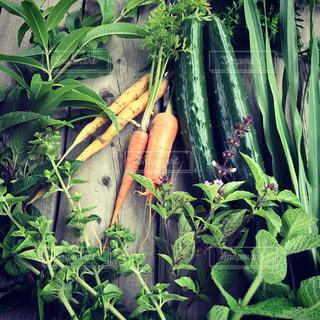 野菜の写真・画像素材[559502]