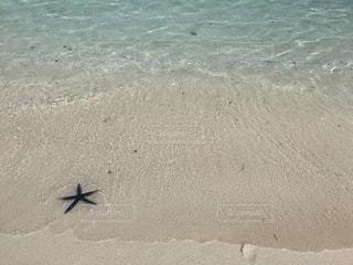 海辺のヒトデの写真・画像素材[914939]