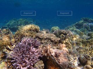 珊瑚礁の写真・画像素材[914981]