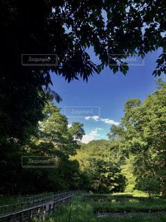 近くの緑地の写真・画像素材[1165767]