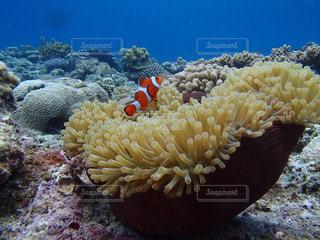 近くに珊瑚のアップの写真・画像素材[1385854]