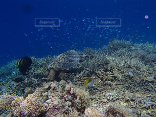 サンゴの水中ビューの写真・画像素材[1385962]
