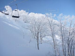 空,木,雪,白,晴れ,スキー場,白樺,リフト,湯沢