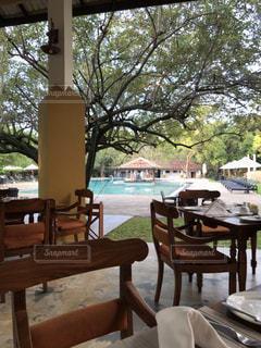 食事,朝食,屋外,プール,テーブル,樹木,レストラン,ホテル,スリランカ,オープンエア,シーギリヤ