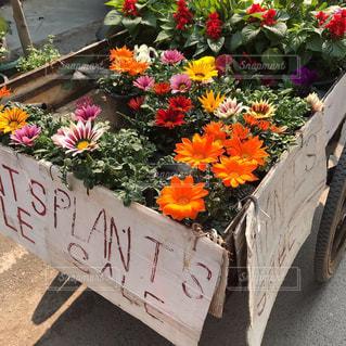 花,街角,屋外,散歩,旅行,旅,インド,カラー,草木,ニューデリー,花売り
