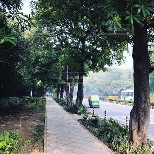 屋外,散歩,道路,都会,旅行,旅,地面,インド,通り,街路樹,ニューデリー