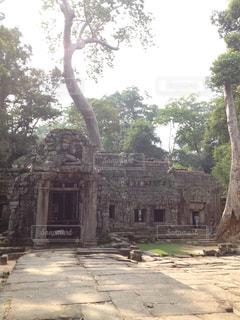 空,屋外,世界遺産,樹木,遺跡,石,寺,カンボジア,タプローム