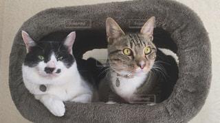 猫,仲良し,猫カフェ,ツーショット,保護猫