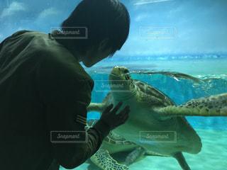 ウミガメの写真・画像素材[393298]