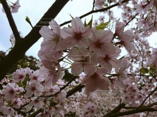 春 - No.424055