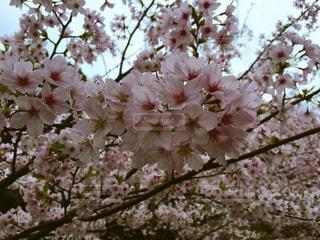 春 - No.424090