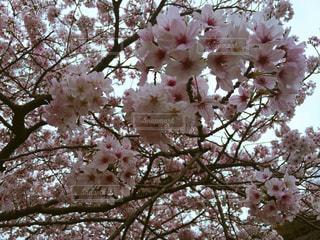 春の写真・画像素材[424145]