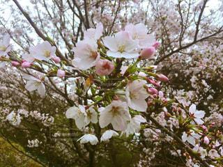 春の写真・画像素材[427787]