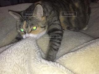 猫の写真・画像素材[600290]