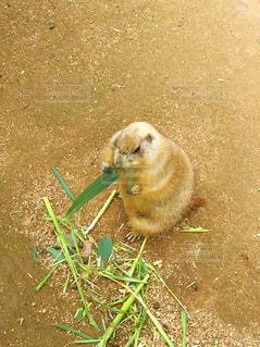 草の中の小さな齧歯動物 - No.721908
