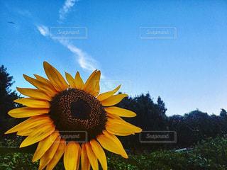 近くに黄色い花のアップ - No.769153