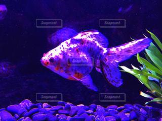 水面下を泳ぐ魚たち - No.771787