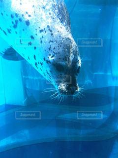 水のプールで泳いでいる犬 - No.772538