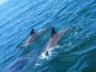 水の体内を泳ぐイルカ - No.864905