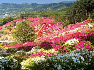 背景に山のカラフルなフラワー ガーデン - No.1143333