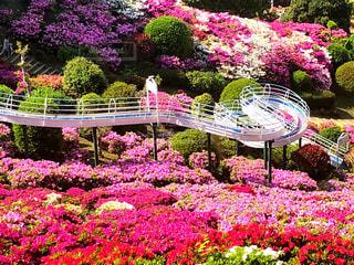 公園でカラフルなフラワー ガーデンの写真・画像素材[1143346]
