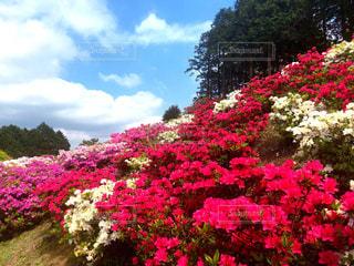 植物にピンクの花 - No.1143350