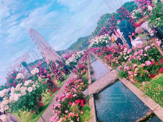 近くのフラワー ガーデン - No.1197403