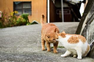 猫,野良猫,香川県,男木島,ツーショット