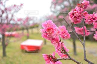 植物にピンクの花の写真・画像素材[1833695]