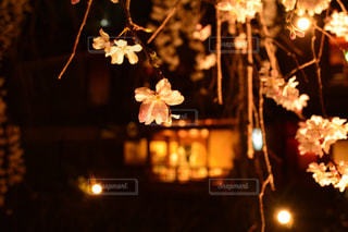 夜ライトアップされたクリスマス ツリーの写真・画像素材[1833698]